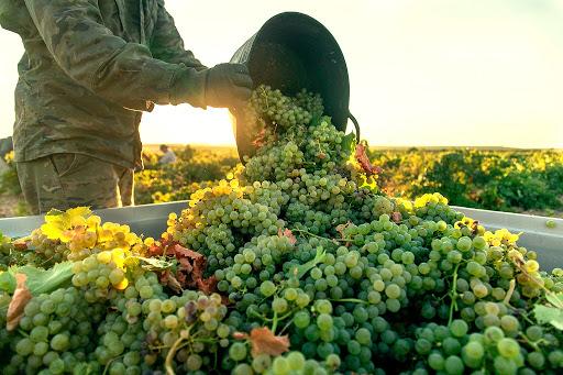 Amador Diez Cuvée Especial 2015, el epítome del vino artesanal de la DO Rueda