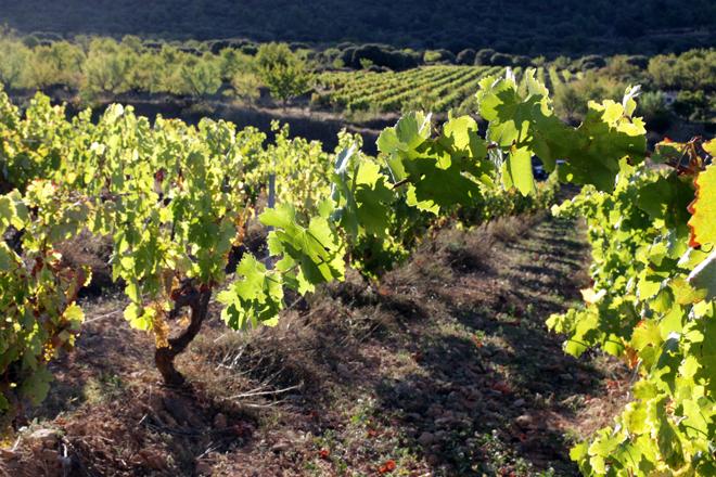 Parker encumbra los vinos de la DO Valencia con 42 sobresalientes