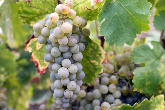 2L, Merseguera de viticultor en el Alto Turia, DO VALENCIA