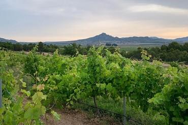 El comercio de proximidad es clave medioambiental para el sector del vino